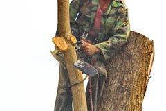 La gente sta tagliando gli alberi con un motore della motosega fotografia stock
