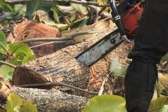 La gente sta tagliando gli alberi con un motore della motosega immagine stock