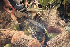 La gente sta tagliando gli alberi con un motore della motosega fotografie stock
