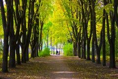La gente sul vicolo nel parco soleggiato di autunno Immagine Stock