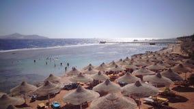 La gente sulla vacanza riunisce le conchiglie sulla spiaggia e prende i bagni del sole stock footage