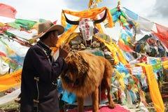 La gente tibetana Immagine Stock