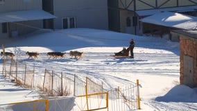 La gente va a sledging Tracción de los perros de trineo metrajes