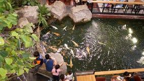 La gente visita y mirando nadada de los pescados de Koi en las charcas Bangkok, Tailandia almacen de video