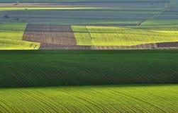 La geometria verde Fotografia Stock