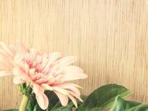 La gerbera rosa della margherita fiorisce sui toni di legno dell'annata del fondo Fotografia Stock