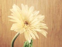 La gerbera rosa fiorisce sui toni di legno dell'annata del fondo Fotografie Stock