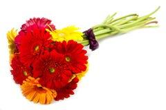 La gerbera variopinta fiorisce il mazzo Immagini Stock Libere da Diritti