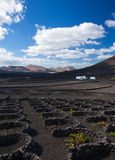 La Geria, Lanzarote Royalty Free Stock Photo