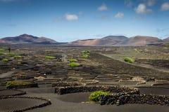 La Geria, Lanzarote image stock