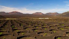 La Geria, Lanzarote eiland Stock Foto's