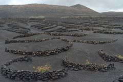 Lanzarote, Canary Islands, Spain, Vineyard on the lava. La Geria, Lanzarote Island, Canary, Spain, Vineyards in dark lava soil stock image