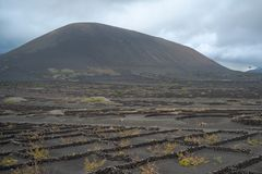 Lanzarote, Canary Islands, Spain, Vineyard on the lava. La Geria, Lanzarote Island, Canary, Spain, Vineyards in dark lava soil stock photos