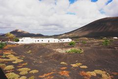 La Geria, Lanzarote. View of vine growing on a volcanic island of Lanzarote Stock Photos