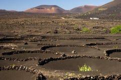 La Geria , Lanzarote Stock Images