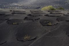 La geria, wine agriculture in Lanzarote Royalty Free Stock Photo