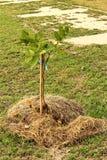 La germinación es la nueva vida de almácigos verdes Foto de archivo