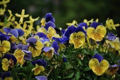 La germination de ressort est ici Photo stock