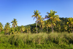 La Giamaica. Natura tropicale. Paesaggio Fotografia Stock Libera da Diritti
