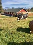 """La gioia sul †dell'azienda agricola"""" una capra va dispersa nell'aria alla luce brillante di mattina Fotografie Stock Libere da Diritti"""