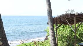 La giovane bella donna sta divertendosi su un'oscillazione al di sotto di un albero in natura, vicino all'oceano Romantico molto  archivi video