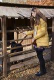 La giovane bella ragazza sta vicino all'uccelliera con l'agnello in zo della città Fotografia Stock Libera da Diritti