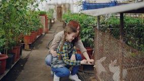 La giovane donna allegra e sua figlia curiosa in grembiuli stanno guardando i conigli ingabbiati sull'azienda agricola Animali do video d archivio
