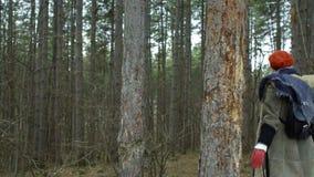 La giovane donna attraente con il cappello rosso vaga in foresta che tocca l'albero video d archivio