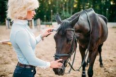 La giovane donna bionda prende la cura per il cavallo marrone Fotografia Stock Libera da Diritti