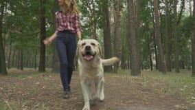 La giovane donna cammina con un Labrador nella foresta stock footage