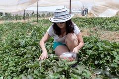 La giovane donna che occupa e riunisce una fragola matura Fotografie Stock Libere da Diritti