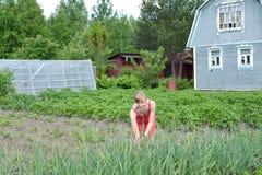 La giovane donna circa un letto con le cipolle verdi su un secti del paese Fotografia Stock