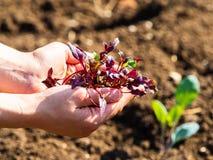 La giovane donna ha una piccola pianta in sue mani, nei precedenti l'orto immagini stock libere da diritti