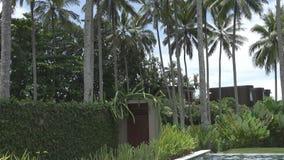 La giovane donna snella ha un resto nello stagno nella località di soggiorno tropicale sotto le palme video d archivio