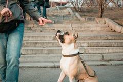 La giovane donna sta preparando il suo cane nel parco di sera Fotografie Stock Libere da Diritti