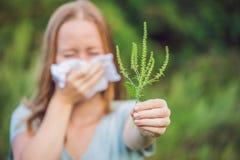 La giovane donna starnutisce a causa di un'allergia all'ambrosia Fotografie Stock