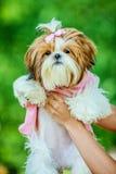 La giovane donna tiene il cane le sue braccia Fotografia Stock