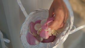 La giovane donna tocca i petali rosa con la mano nella sala all'interno stock footage