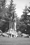 La girafe Images libres de droits