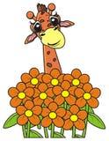 La girafe jette un coup d'oeil du bouquet des fleurs Image libre de droits