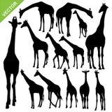 La girafe silhouette le vecteur Photo stock