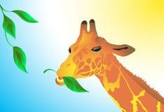La giraffa mangia i fogli verdi. Vettore. Immagine Stock Libera da Diritti