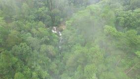 La giungla nella nebbia stock footage