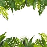 La giungla tropicale lascia il fondo fotografie stock