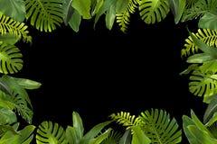 La giungla tropicale lascia il fondo Immagini Stock