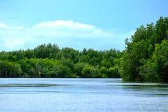 La giungla verde nel fiume Immagine Stock