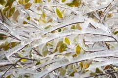 La glace a couvert Autumn Leaves coloré Photo libre de droits