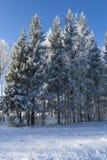 La glace a couvert des arbres Images stock
