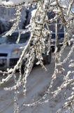 La glace a couvert des branchements Photos stock