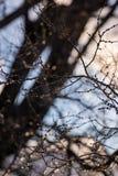La glace a couvert des branches d'arbre réfléchissant la lumière de matin photos stock